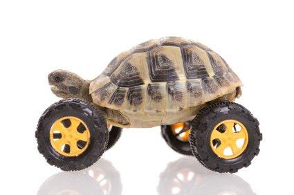 Innovation Turtle